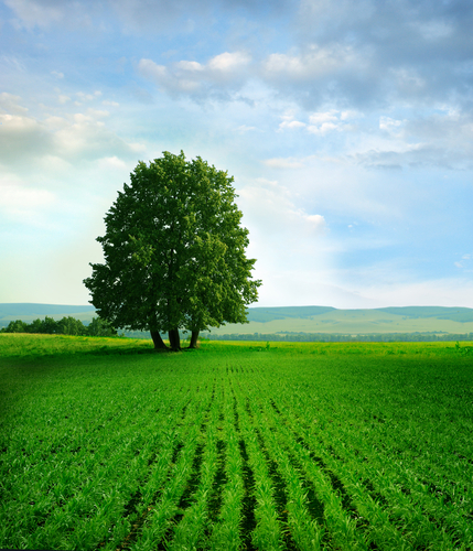 Natural Vs Organic Food What